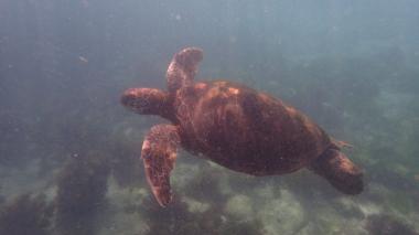浮潛的時候正好游來一群海龜