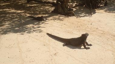 蜥蜴是冷血動物,白天在沙灘上曬太陽取暖